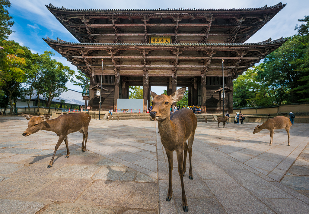 nara-japan-deer-283