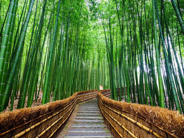 dream-bamboo